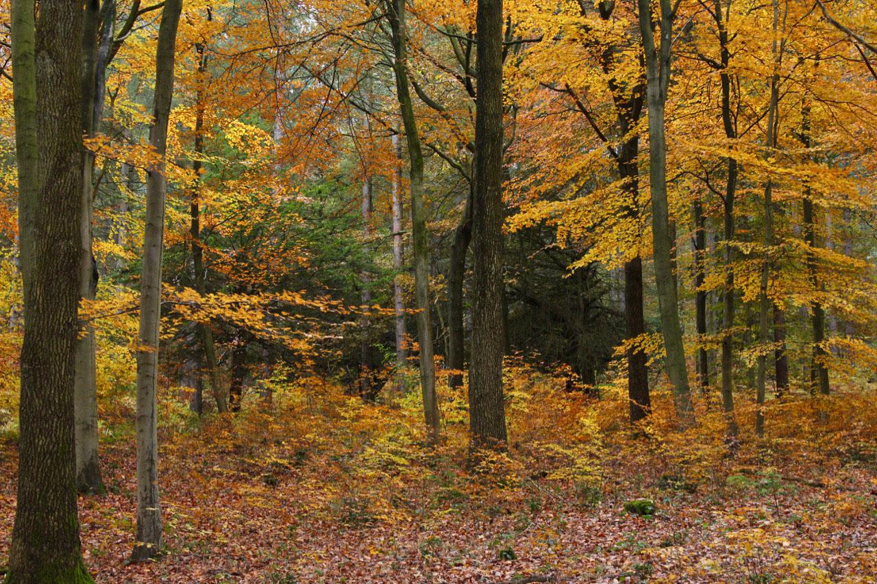 Autumn woodland - © Rosemary Winnall
