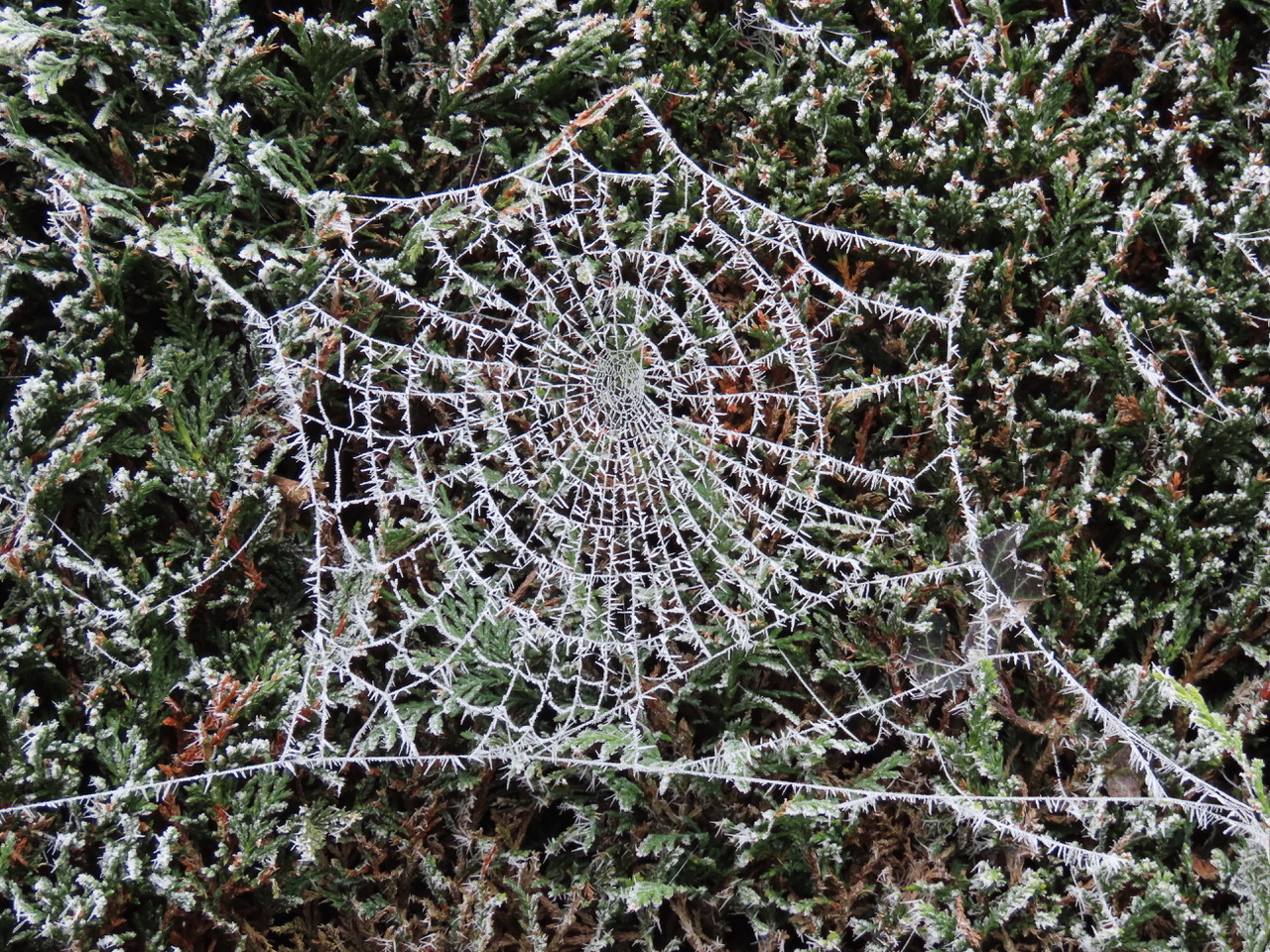 Spider's web © Rosemary Winnall