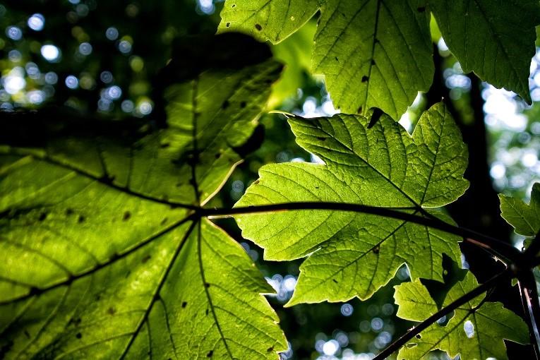 Forest sunlight